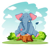 Elephant above the trunk Stock Photos