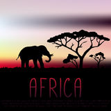Elephant and acacia silhouette on sunset background Stock Image