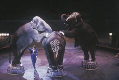 Elephant Act, Ringling Brothers & Barnum & Bailey Circus Stock Photography