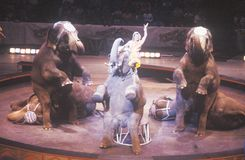 Elephant Act, Ringling Brothers & Barnum & Bailey Circus Royalty Free Stock Photo