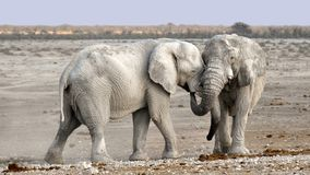 Elephant, Africa, Namibia, Nature Royalty Free Stock Images
