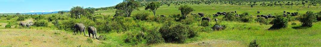 Elephant Royalty Free Stock Photos
