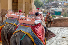 Elephant Amber Fort Stock Photography