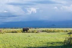 Elephant in Amboseli Royalty Free Stock Image