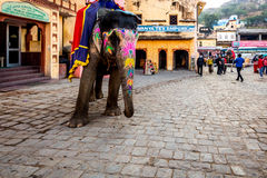 Elephant in Amer village Royalty Free Stock Images