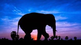Elephant andpPalm tree on twilight time Stock Photos