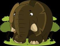 Elephant, Animal, Jungle, Savannah Stock Photography