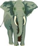 Elephant, Animal, Mammal, Trunk Stock Photography