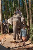 Elephant Arrival Spot. Tourists ride an elephant Royalty Free Stock Images