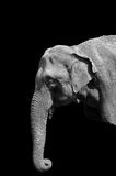 Elephant art Royalty Free Stock Photography