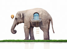 Elephant as a house Stock Photo