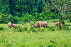 Elephant Asia (hungry mice) Royalty Free Stock Photo