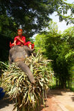 Elephant, Ayutthaya, Thailand. Royalty Free Stock Photo