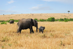 Elephant with baby royalty free stock photos