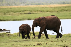 Elephant with baby Stock Photos