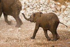 Elephant baby. Safari Etosha, Namibia Africa Stock Photo