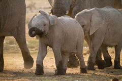Elephant baby Royalty Free Stock Photography