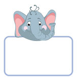 Elephant. Baby animal banner Royalty Free Stock Photography