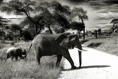 Elephant, Baby Elephant, Animal Royalty Free Stock Images