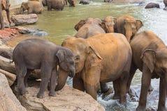 Elephant and baby elephant stock image