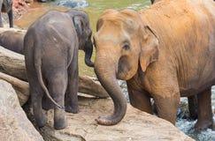 Elephant and baby elephant royalty free stock photo