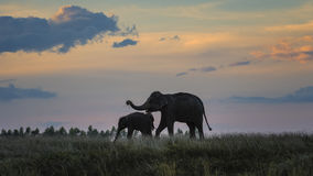 Elephant with baby. Elephant mother and baby on a nature with sunset background Stock Photography