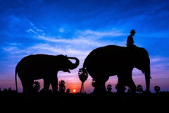 Elephant and baby on twilight time Stock Photos