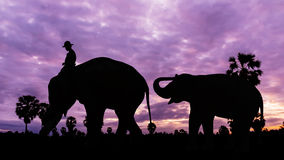 Elephant and baby on twilight time Royalty Free Stock Photo