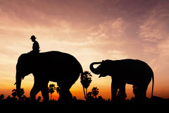 Elephant and baby on twilight time Stock Image