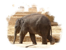 Elephant baby walking alone in the sun royalty free stock images