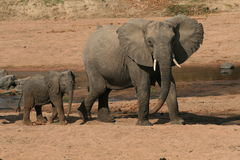 Elephant with Baby at Water Hole Royalty Free Stock Photos