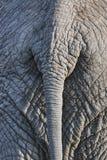 Elephant back Royalty Free Stock Images