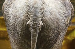 Elephant back Royalty Free Stock Photo