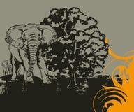 Elephant Background Stock Photo