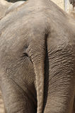 Elephant backside Royalty Free Stock Photos