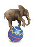 Elephant balance on ball. On white Stock Image