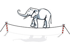 Elephant balancing. Acrobatic elephant balance on rope Royalty Free Stock Image