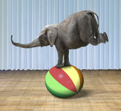 Elephant balancing on a colorful ball Royalty Free Stock Photos
