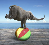 Elephant balancing on a colorful ball Royalty Free Stock Photo
