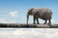 Elephant balancing on tree trunk Stock Photo