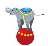 Elephant on the ball Stock Photos