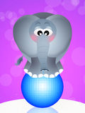 Elephant on ball Royalty Free Stock Photo