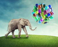 Elephant with balloons royalty free stock images