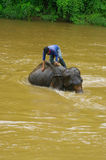 Elephant bath Royalty Free Stock Images