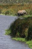 Elephant at bath Stock Photography