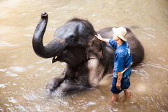 Elephant daily bath Stock Image