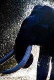 Elephant bath royalty free stock photos