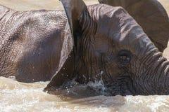 Elephant bath Royalty Free Stock Photography
