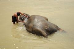 Elephant bath, NP Chitwan, Nepal. CHITWAN NATIONAL PARK, SAURAHA, NEPAL- CIRCA SEPTEMBER 2010: Unidentified man washs Asian Elephant circa September, 2010 Stock Images
