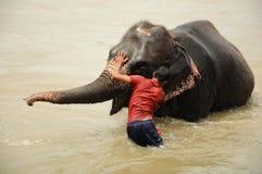 Elephant bath, NP Chitwan, Nepal. CHITWAN NATIONAL PARK, SAURAHA, NEPAL- CIRCA SEPTEMBER 2010: Unidentified man washs Asian Elephant circa September, 2010 Royalty Free Stock Photography